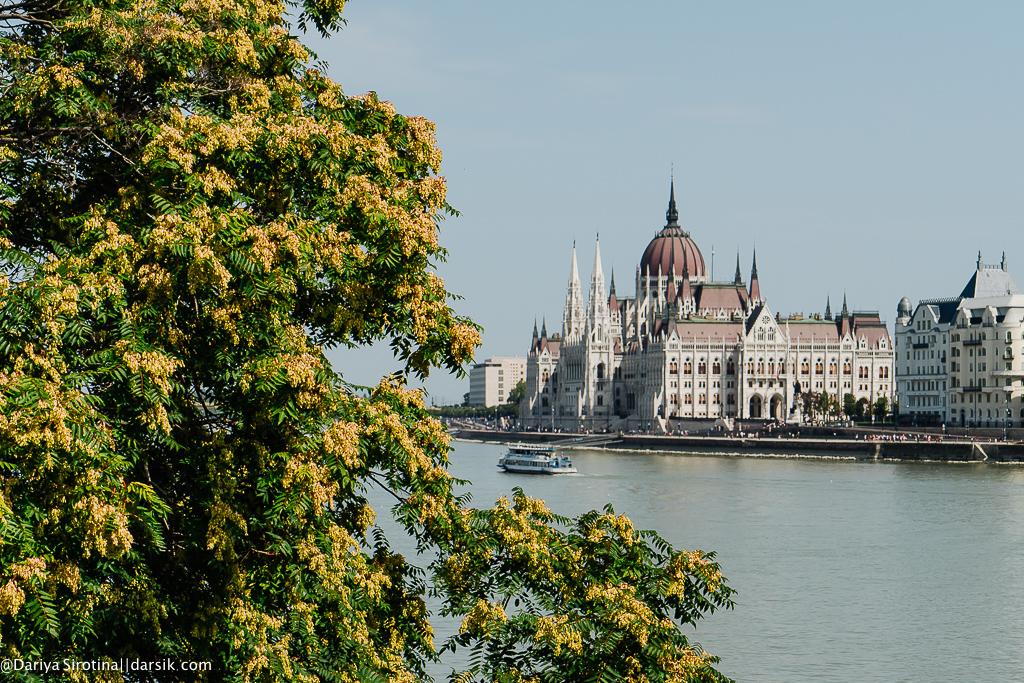 10 брендов, на которые стоит обратить внимание в Венгрии